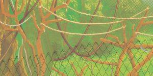 Anina Brisolla: Walled garden